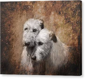 Tenderness Canvas Print by Mary OMalley