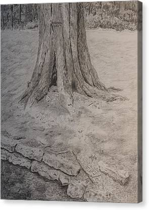 Tennessee Tree And Rock Wall Canvas Print by Arthur Witulski