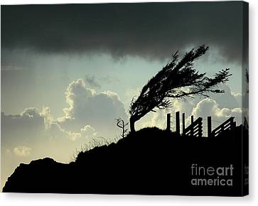 The Test Of Time Canvas Print by Nick  Boren