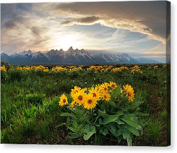 Teton Spring 2 Canvas Print by Leland D Howard
