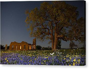 Texas Blue Bonnets At Night Canvas Print by Keith Kapple