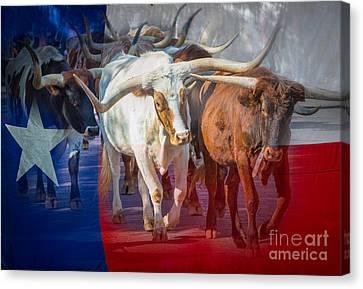 Texas Longhorns Canvas Print by Inge Johnsson