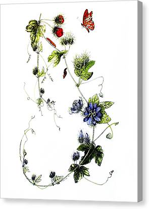 Texas Passion Flower Canvas Print by Sue Sill