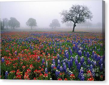 Texas Spring - Fs000559 Canvas Print by Daniel Dempster