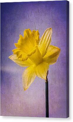 Textured Daffodil Canvas Print by Garry Gay