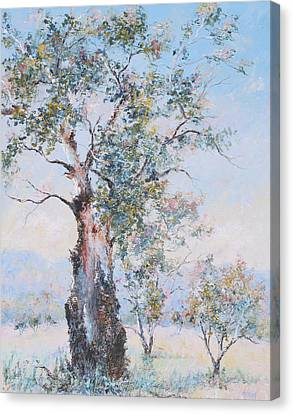 The Ancient Gum Tree Canvas Print by Jan Matson