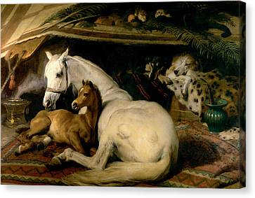 The Arab Tent Canvas Print by Sir Edwin Landseer