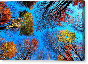 The Autumn Leaves At Potato Creek Canvas Print by Tina M Wenger