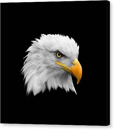 The Bald Eagle Canvas Print by Mark Rogan