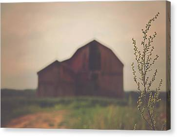 The Barn Daylight Version Canvas Print by Carrie Ann Grippo-Pike