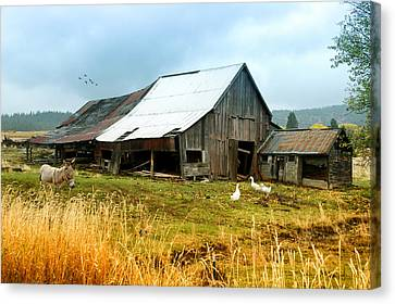 The Barnyard Bunch Canvas Print by Mary Timman