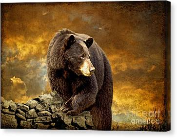 The Bear Went Over The Mountain Canvas Print by Lois Bryan