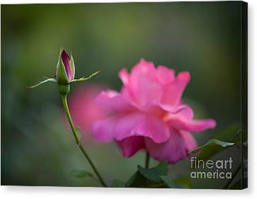 The Beauty And The Promise Canvas Print by Mike Reid