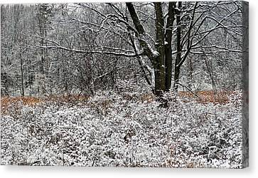 The Beauty Of Winter Canvas Print by Aimee L Maher Photography and Art Visit ALMGallerydotcom