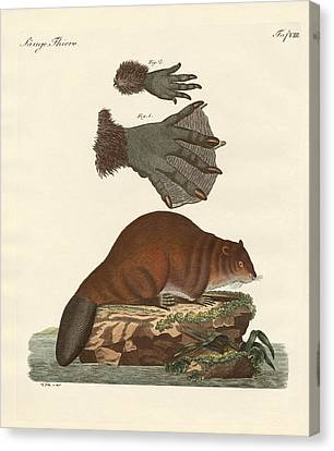 The Beaver Canvas Print by Splendid Art Prints