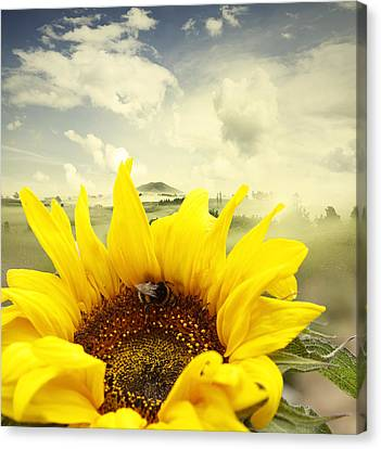 The Bee Canvas Print by Les Cunliffe