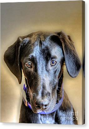 The Black Lab Canvas Print by Robert Pearson
