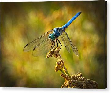 The Blue Dragonfly  Canvas Print by Saija  Lehtonen