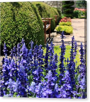The Blues In The Garden Canvas Print by Elizabeth Sullivan