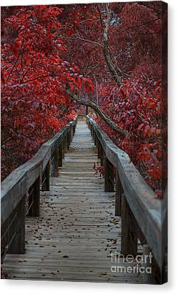 The Boardwalk Canvas Print by Douglas Barnard