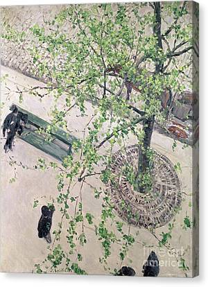 The Boulevard Viewed From Above Canvas Print by Gustave Caillebotte