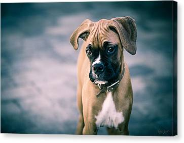 The Boxer Canvas Print by Karen Zucal Varnas