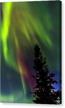 The Burning Tree Canvas Print by Kyle Lavey
