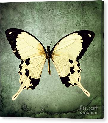 The Butterfly Project 1 Canvas Print by Diane Miller