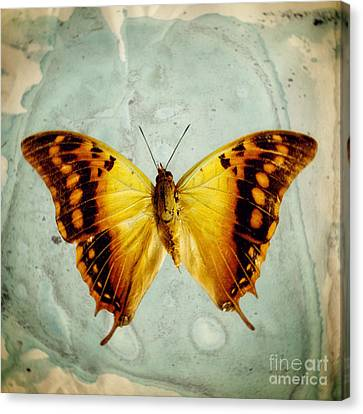 The Butterfly Project 6 Canvas Print by Diane Miller