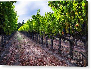 The Cabernet Is Ready Canvas Print by George Oze