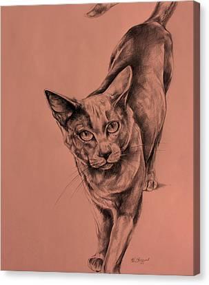 The Cat  Canvas Print by Derrick Higgins