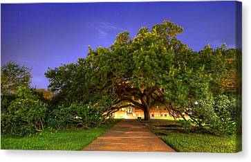 The Century Tree Canvas Print by David Morefield