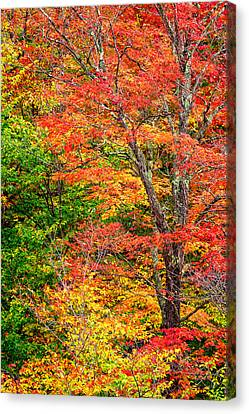 The Colors Of Autumn Canvas Print by Jeff Sinon