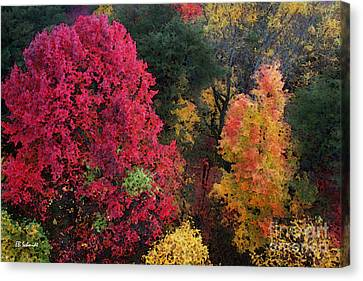The Colors Of Fall Canvas Print by E B Schmidt
