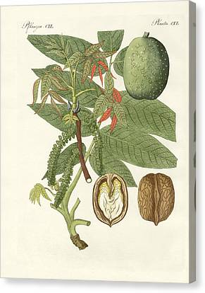 The Common Walnut-tree Canvas Print by Splendid Art Prints