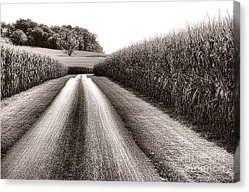 The Corn Road Canvas Print by Olivier Le Queinec