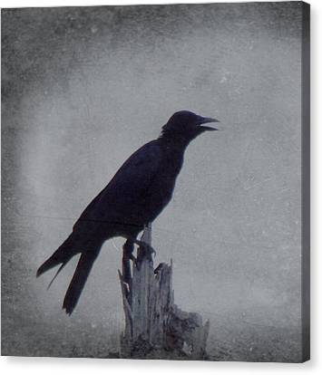 The Crow Canvas Print by Justin Ivins