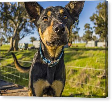 The Curious Dog  Canvas Print by Naomi Burgess