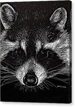 The Curious Raccoon Canvas Print by Nathan Cole