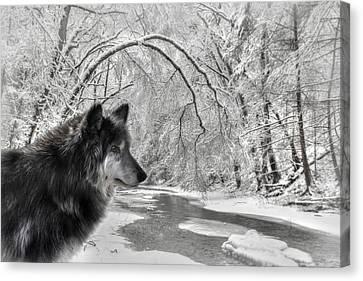 The Dark Wolf Canvas Print by Lori Deiter