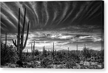 The Desert In Black And White Canvas Print by Saija  Lehtonen