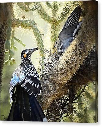 The Dove Vs. The Roadrunner Canvas Print by Saija  Lehtonen