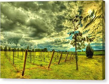 The Exotic Vineyard Canvas Print by  Caleb McGinn