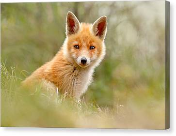 The Face Of Innocence _ Red Fox Kit Canvas Print by Roeselien Raimond