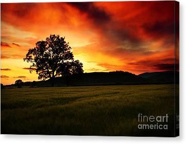 the Fire on the Sky Canvas Print by Angel  Tarantella