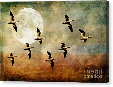 The Flight Of The Snow Geese Canvas Print by Lois Bryan