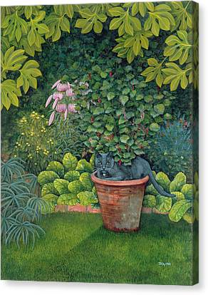 The Flower Pot Cat Canvas Print by Ditz