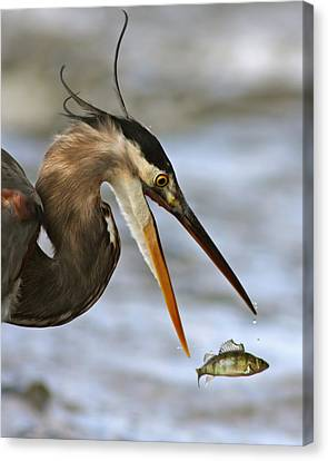 The Flying Fish Canvas Print by Mircea Costina Photography