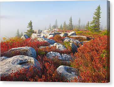 The Fog Clears At Dolly Sods Canvas Print by Bill Swindaman