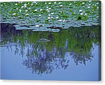 The Forest Beneath The Lilypads Canvas Print by Jean Hall